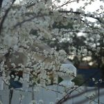 whitespring