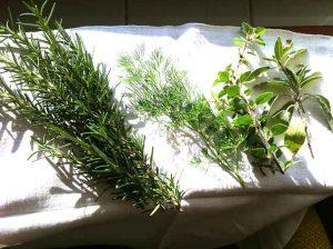 front-yard-Herb-garden