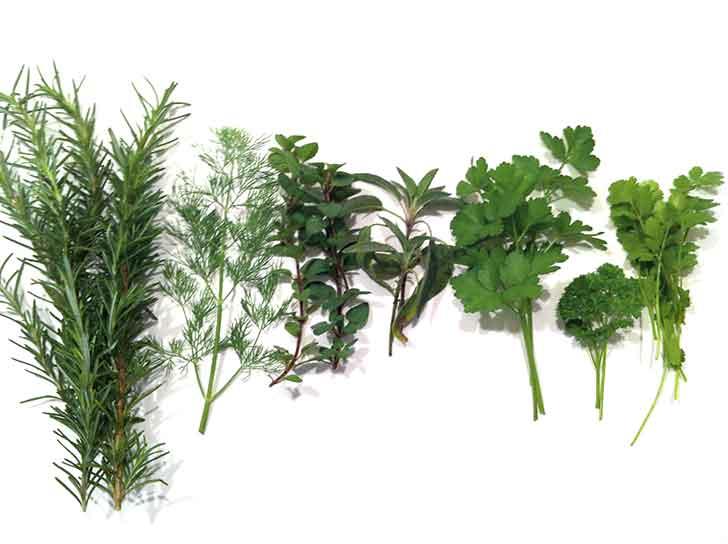 front-yard-herb_garden-main