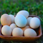 pastured eggs 648
