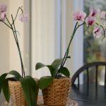 house plants 1 847